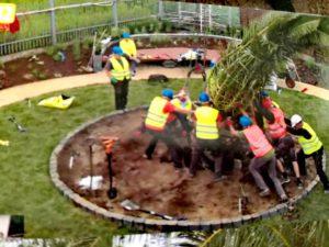 Posadzenie palmy w ogrodzie pod Nadarzynem było szaleństwem. Ale roślina przeżyła już dwie zimy.