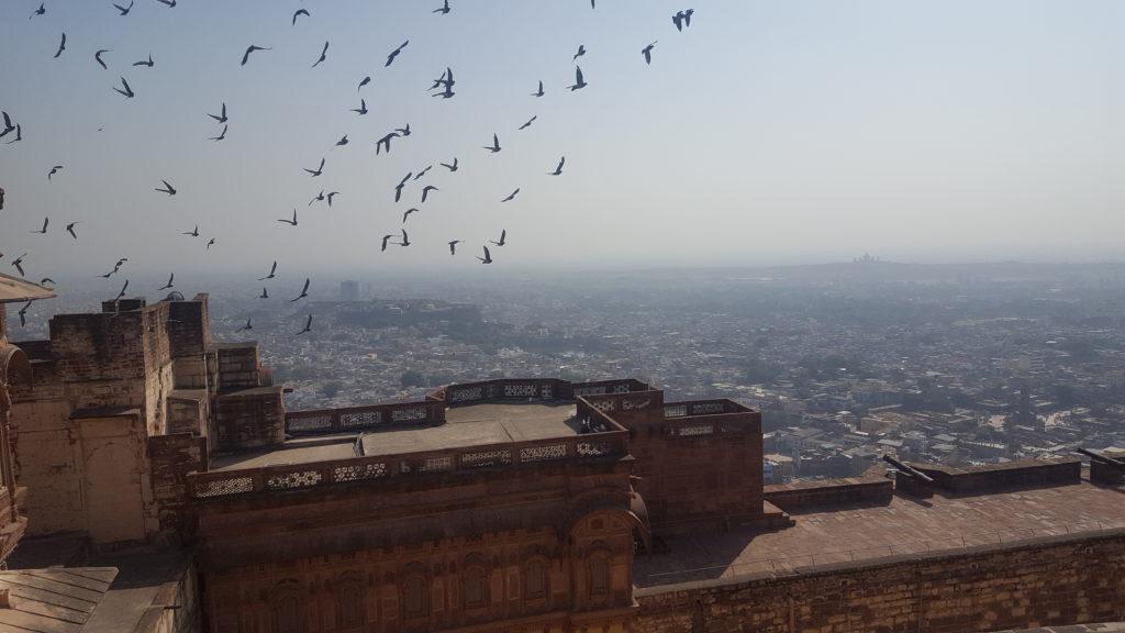Beata Wasyluk: życie w wielu hinduskich miastach toczy się także na dachach